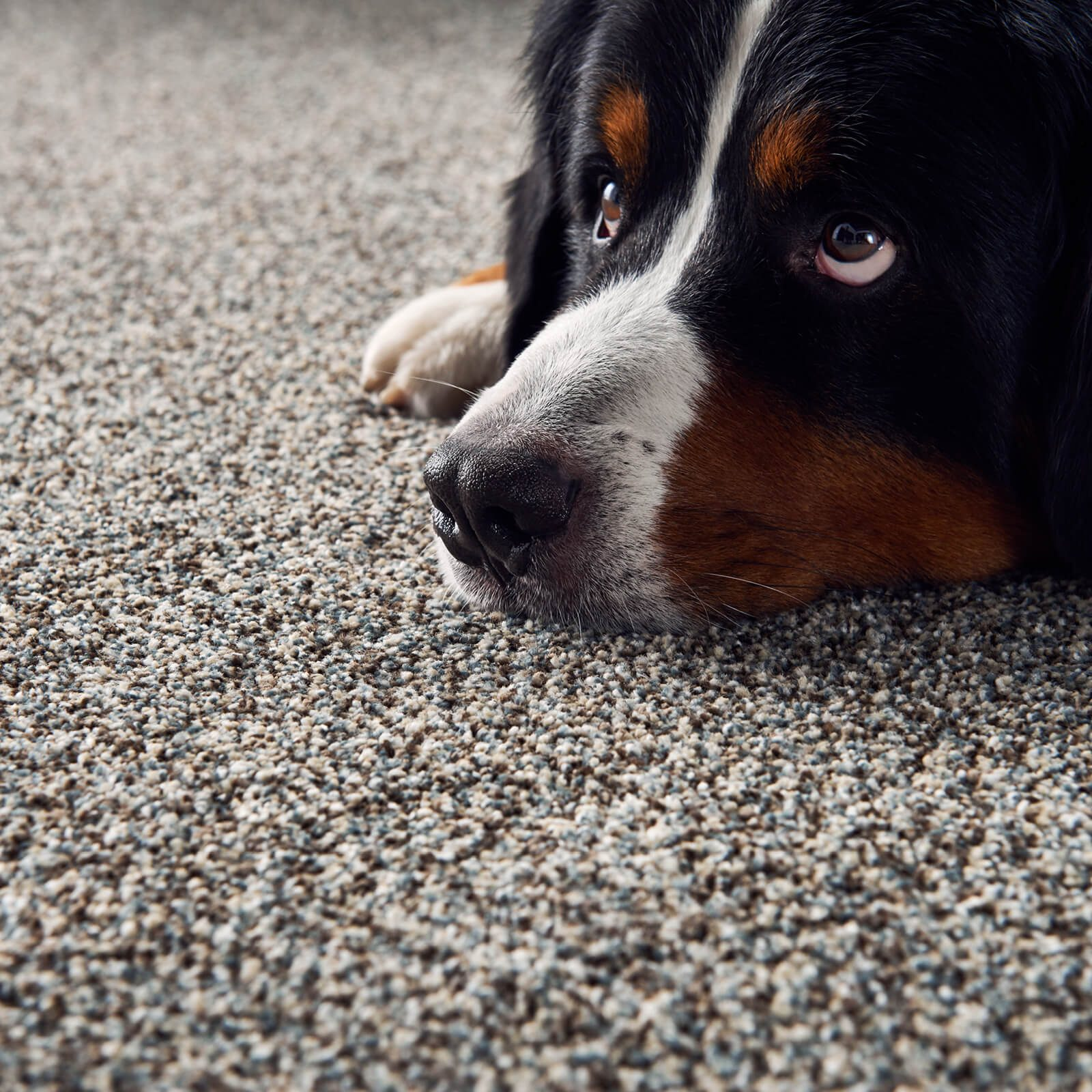 Plush Carpet Flooring | Leicester Flooring